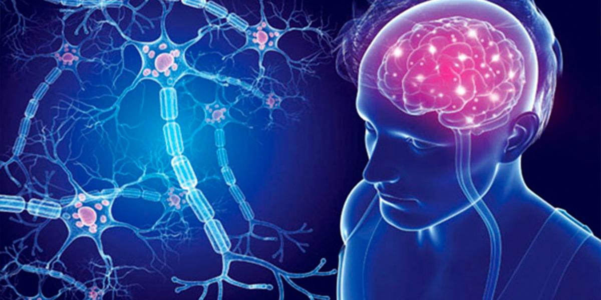 Клетки пуповинной крови эффективны против ишемического инсульта