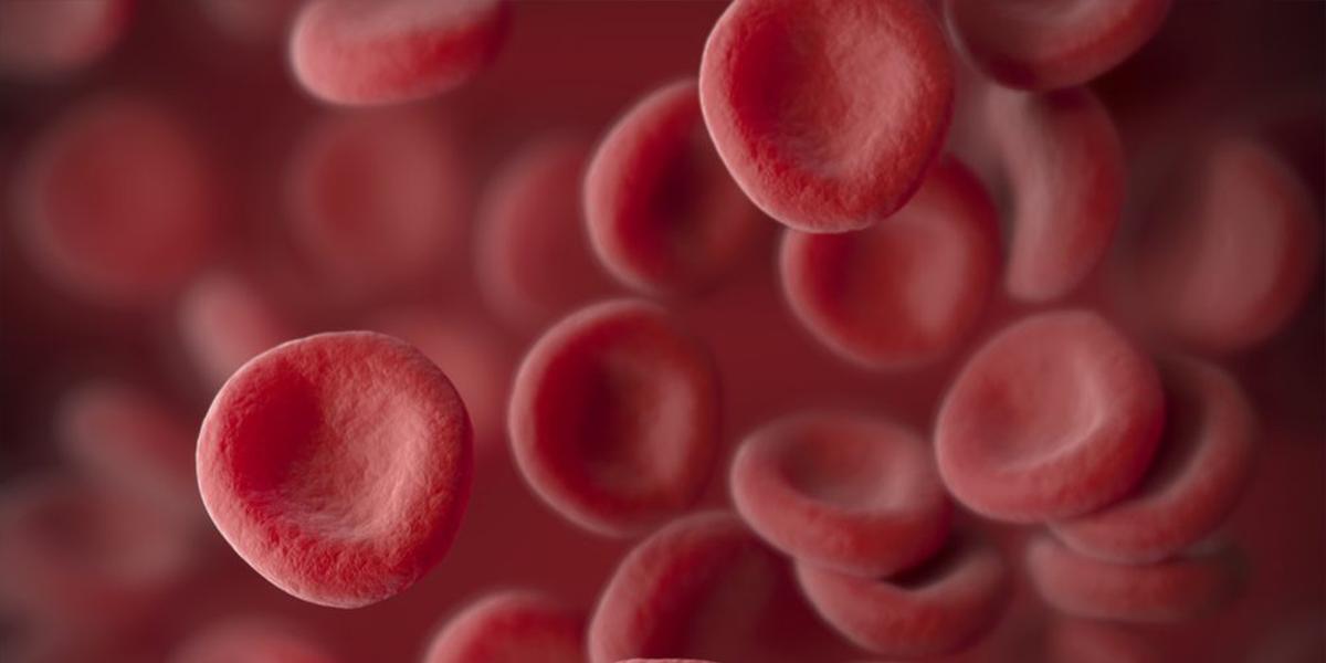 Размноженные клетки пуповинной крови восстанавливают кроветворение быстрее