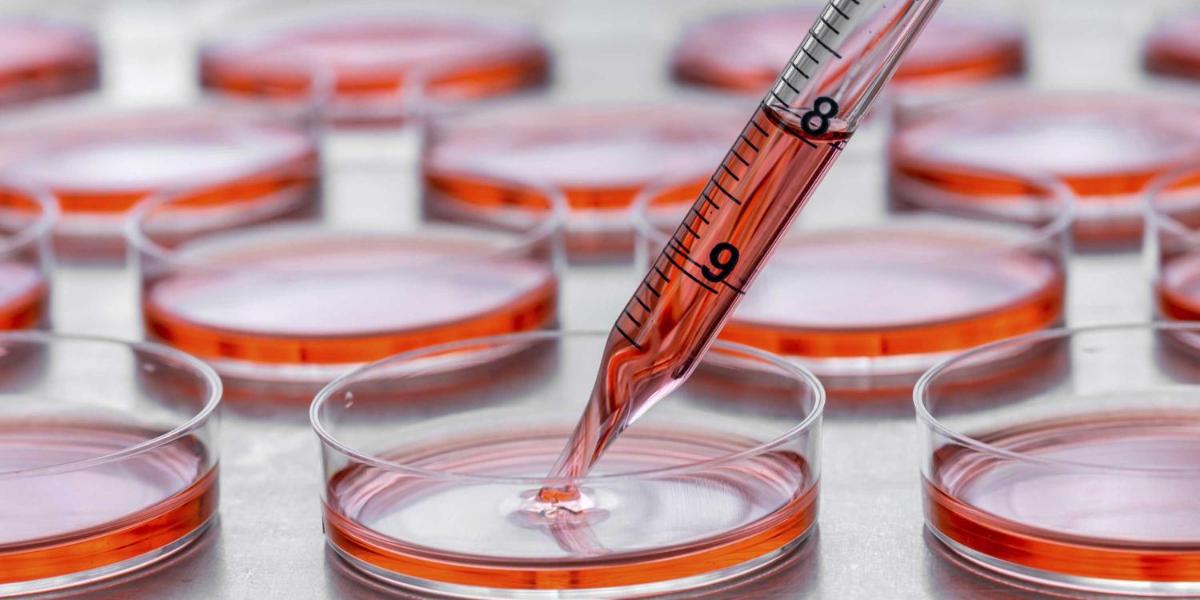 В Канаде впервые провели трансплантацию размноженных клеток пуповинной крови взрослому человеку для лечения апластической анемии
