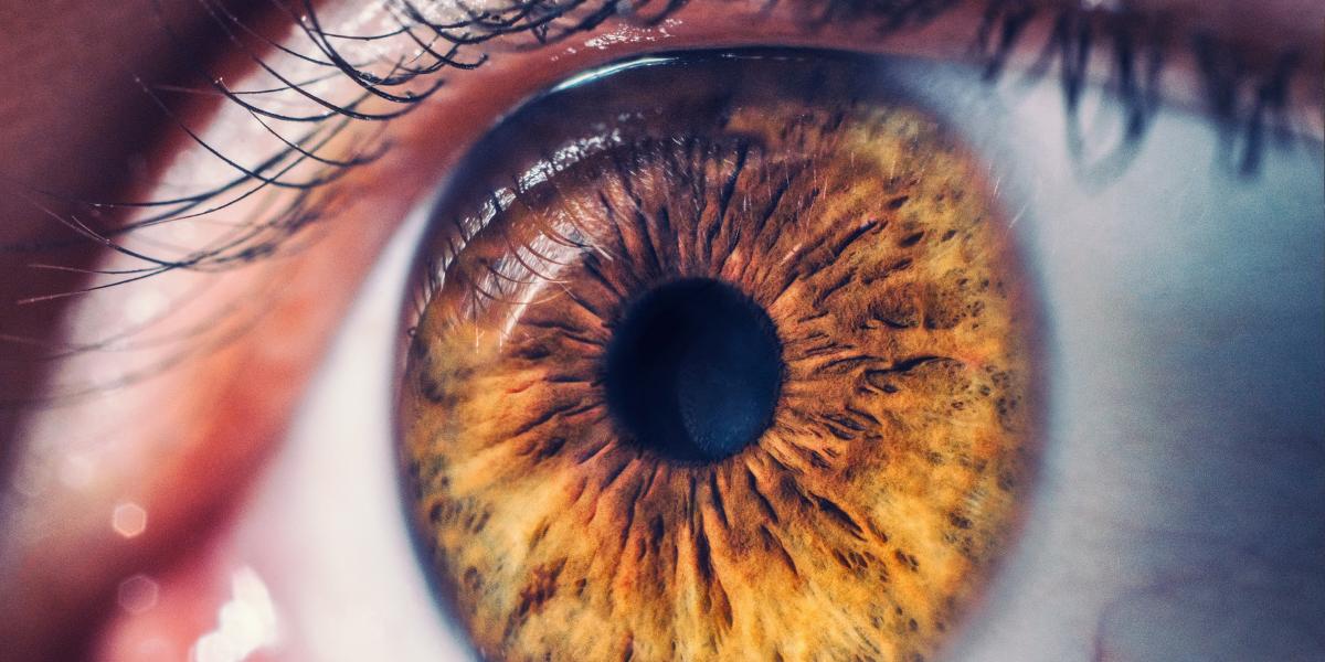 Офтальмологи оценили эффективность применения мезенхимальных стволовых клеток пупочного канатика при пигментном ретините