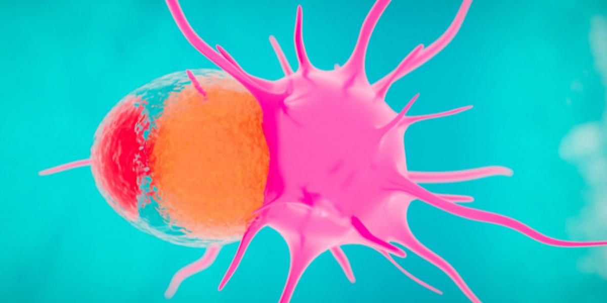 Обзор использования пуповинной крови как источника натуральных киллеров для лечения опухолей